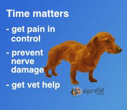 Ataxia-PAIN-vet.jpg