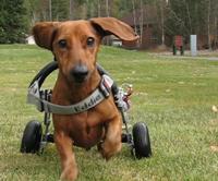wheelchair-running