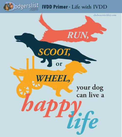 hope-happy-dog-CHUNK.jpg