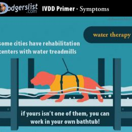 PT – Surgery dog — Water Therapy