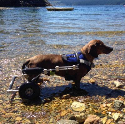 Wheelchair-Rudy.jpg