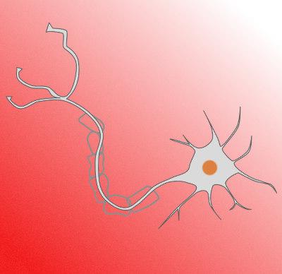 axon-nerve-healing.jpg