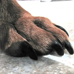 Nail trim for health —Tips and supplies