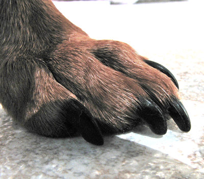 Nail trim for health- nails too long